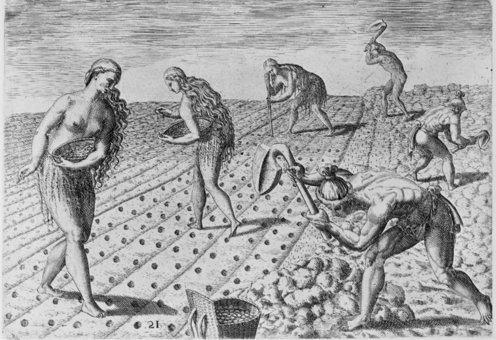 'Florida Indians planting seeds of beans or maize', c. 1560 by Theodor de Bry, Engraved by Jacques Le Moyne de Morgues